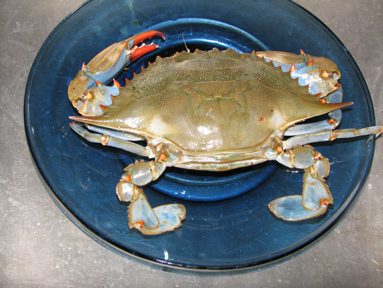 crab-004